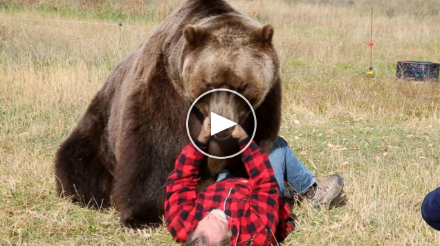<h1>How to Survive a Bear Attack</h1>