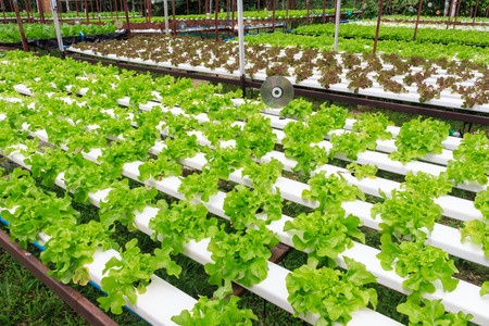 Aquaponics – The Simple Solution For Self Generating Food Storage