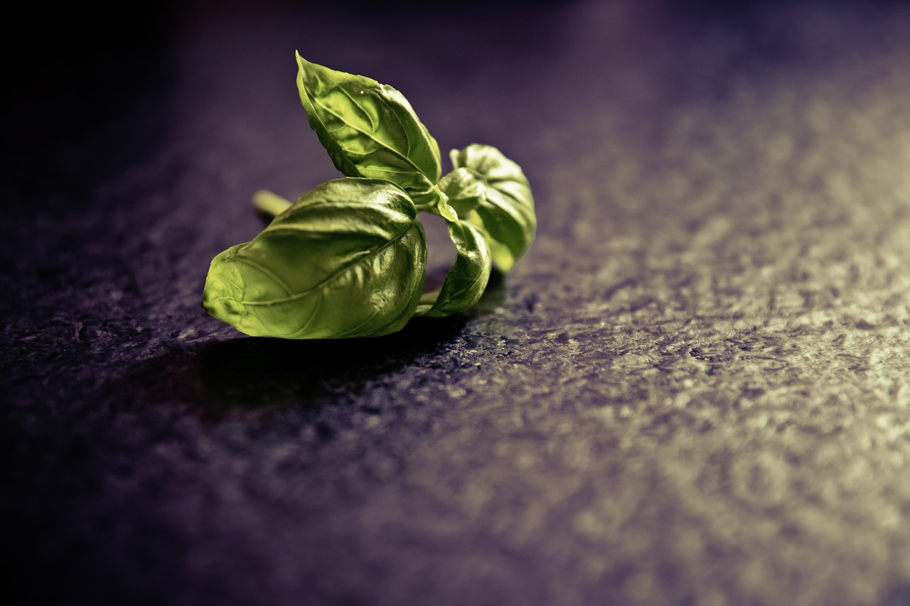 Why Every Prepper Should Have Basil In Their Survival Garden