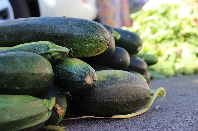 See Why Zucchini Is A Super Easy Survival Food To Grow