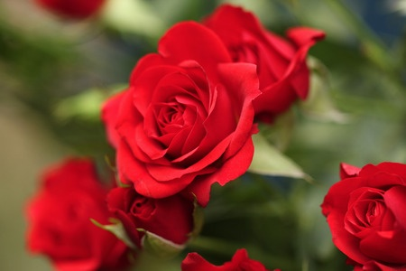 7 Surprising Survival Uses For Roses