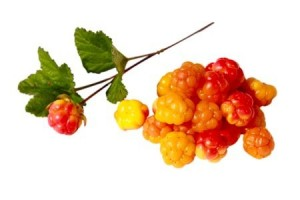 wild berries essential for survival