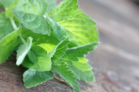 5 Key Tips For Growing Mint For Your Survival Garden