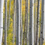 trees every prepper should grow