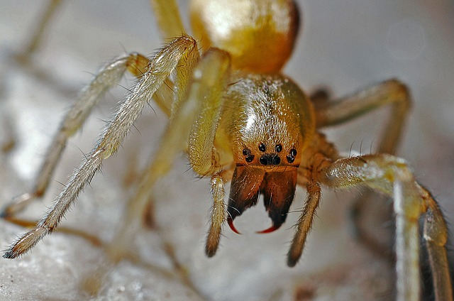 8 Natural Ways To Keep Spiders Away