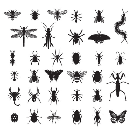 8 Edible Insects For Survival