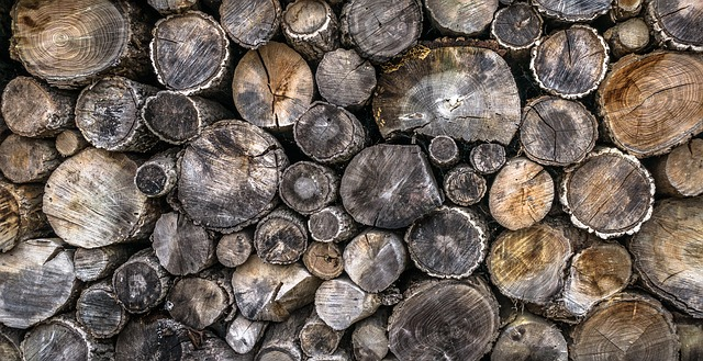 9 Weird Things You Never Knew About Firewood