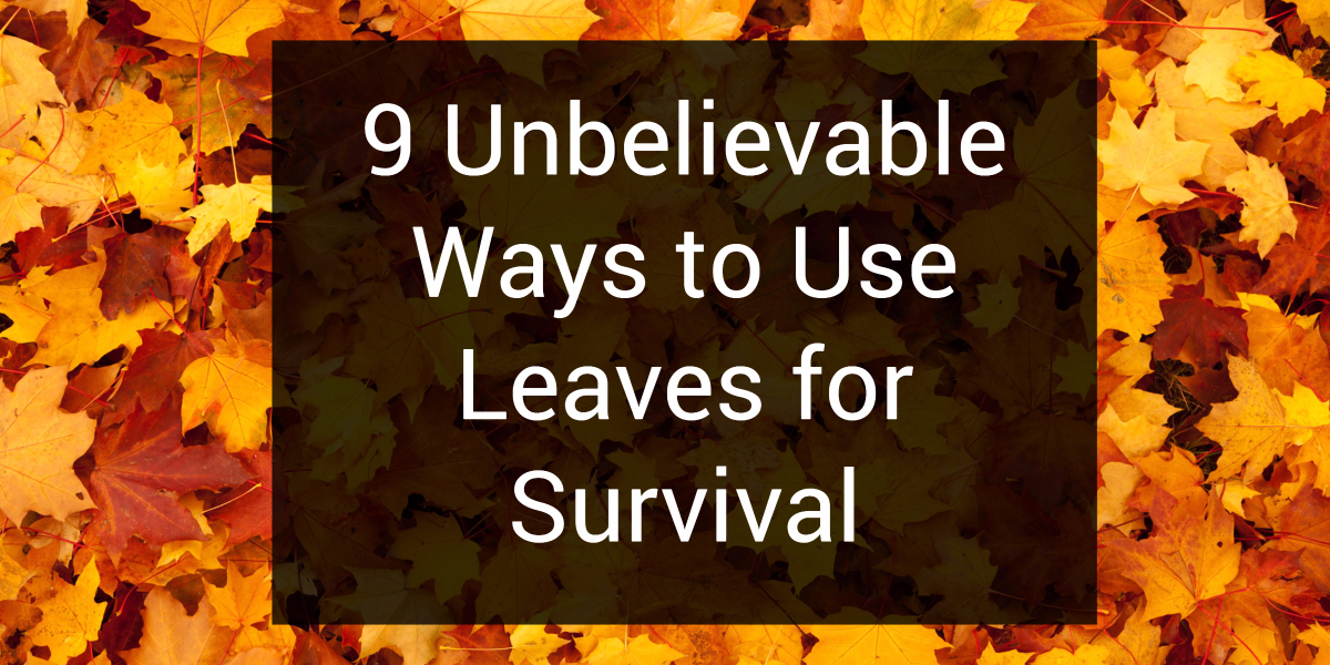 9 Unbelievable Ways to Use Leaves For Survival