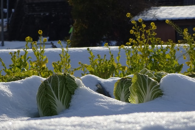 9 Foods You Can Grow In The Winter